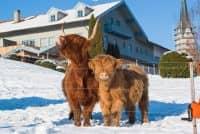 Brunnlechners Kühe